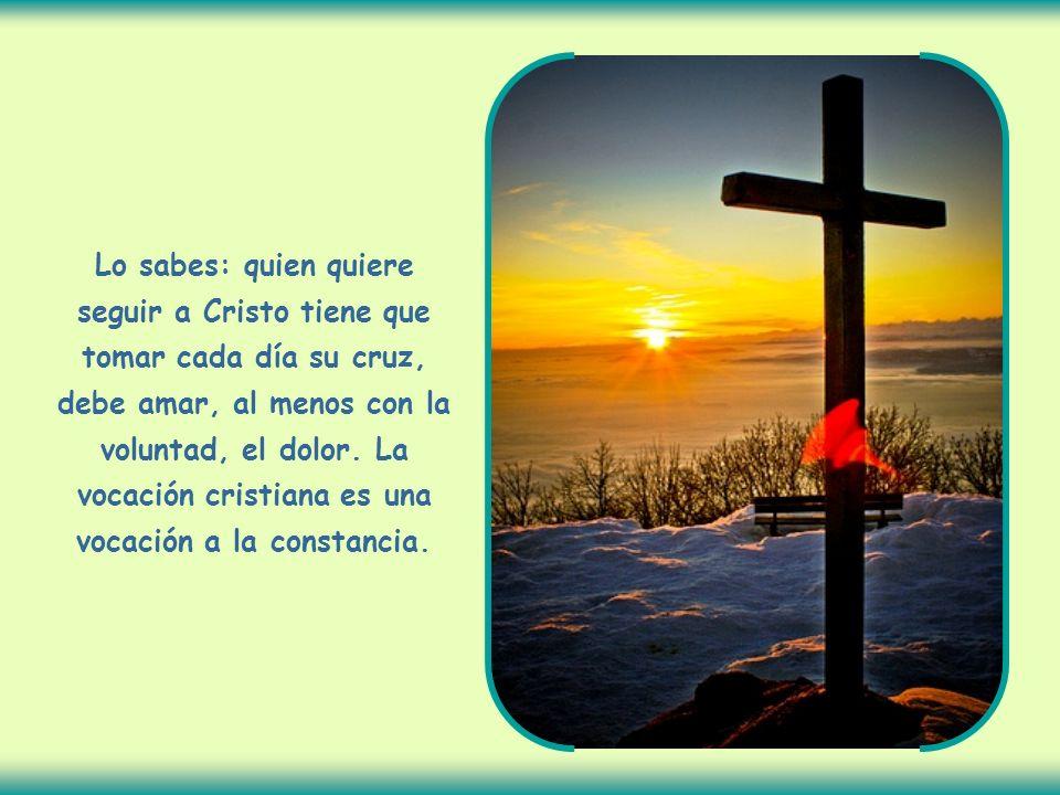 Lo sabes: quien quiere seguir a Cristo tiene que tomar cada día su cruz, debe amar, al menos con la voluntad, el dolor.