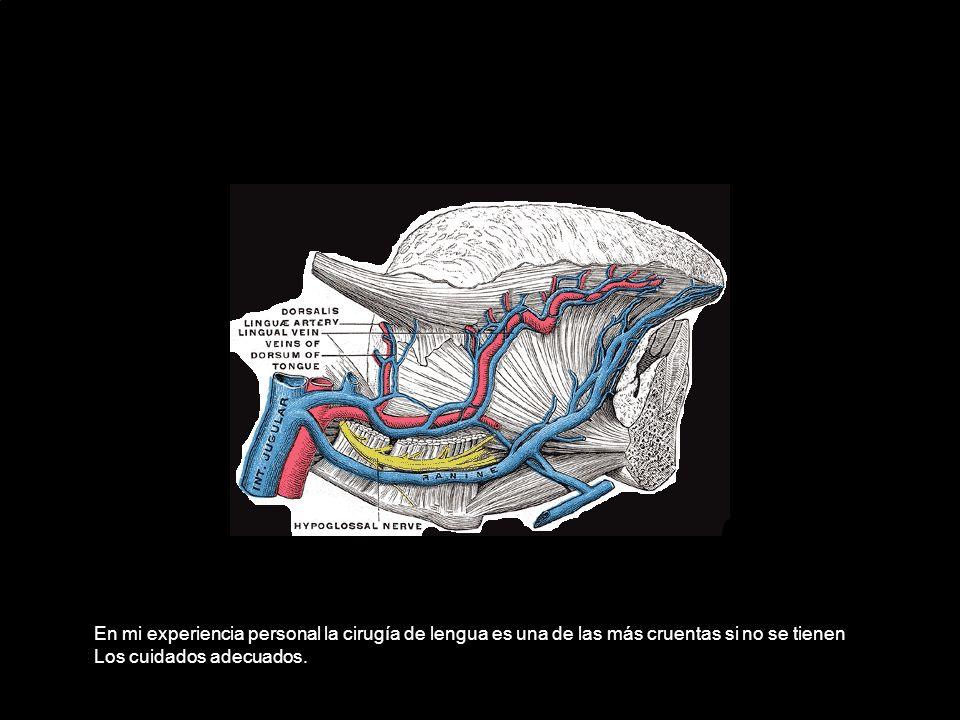 En mi experiencia personal la cirugía de lengua es una de las más cruentas si no se tienen Los cuidados adecuados.