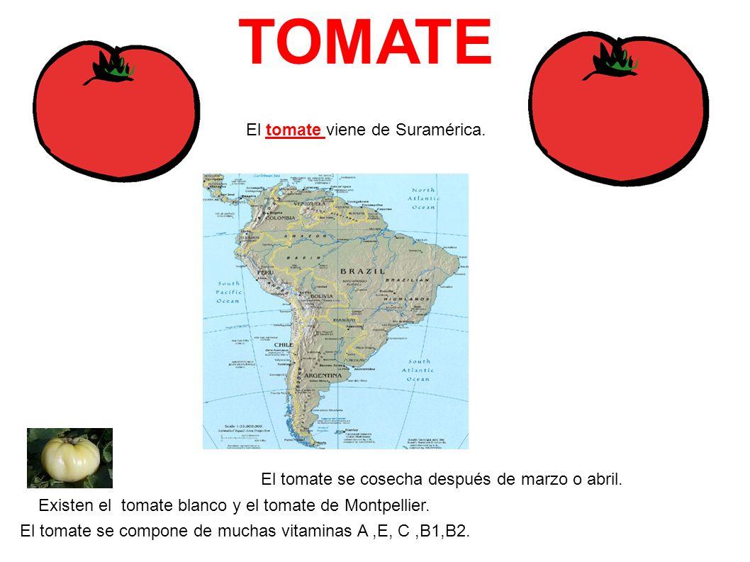 TOMATE El tomate viene de Suramérica. El tomate se cosecha después de marzo o abril. Existen el tomate blanco y el tomate de Montpellier. El tomate se
