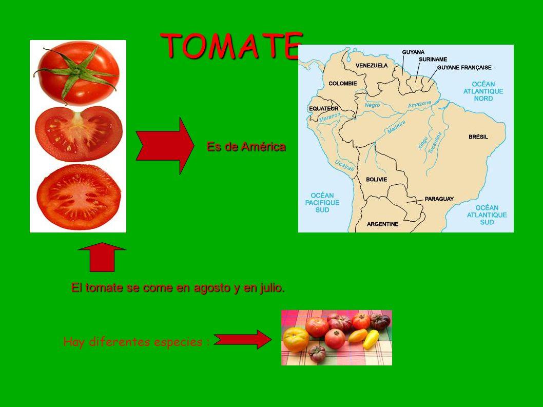 TOMATE Es de América El tomate se come en agosto y en julio. Hay diferentes especies :