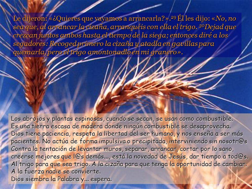 24 Jesús les propuso esta otra parábola: -Con el reino de los cielos sucede lo que con un hombre que sembró buena semilla en su campo. 25 Mientras tod