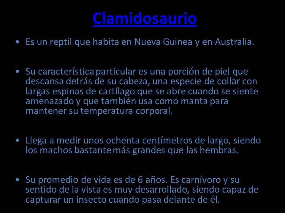 Clamidosaurio Es un reptil que habita en Nueva Guinea y en Australia. Su característica particular es una porción de piel que descansa detrás de su ca