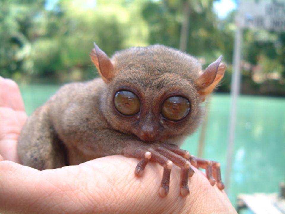Topo de nariz estrellada Es un pequeño topo que habita en Canadá y Estados Unidos, en tierras húmedas.