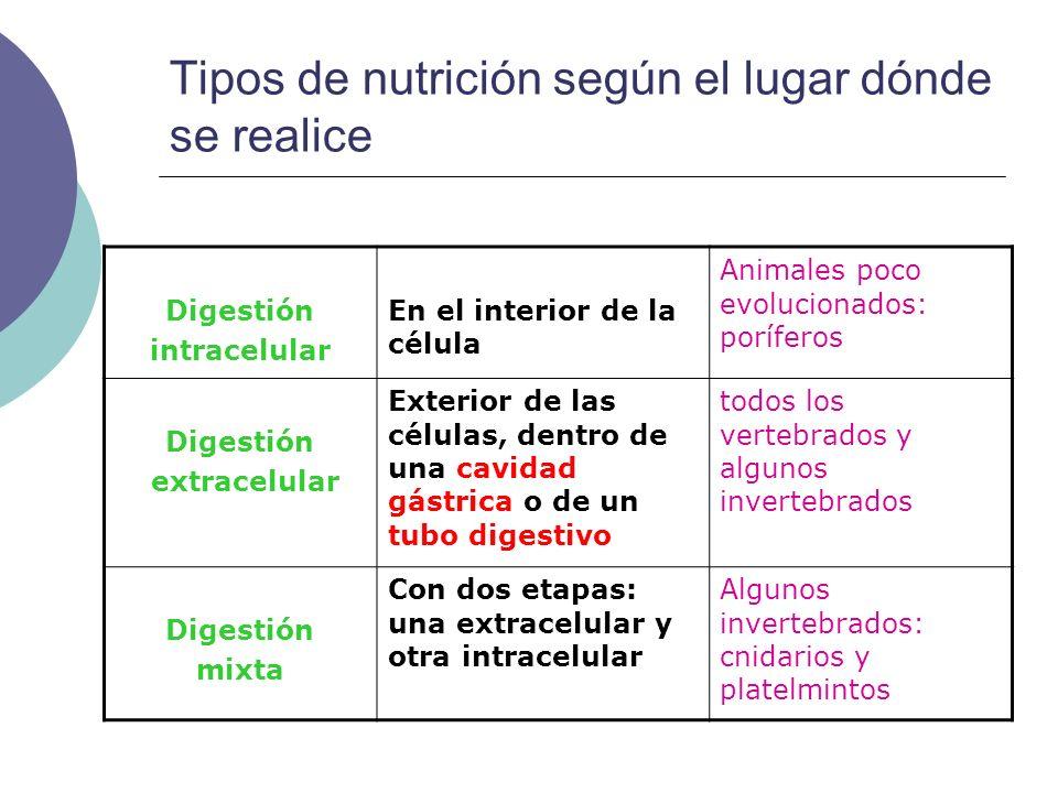 APARATO DIGESTIVO EN VERTEBRADOS Tubo digestivo con regiones muy especializadas Glándulas anejas Glándulas salivales Hígado Páncreas