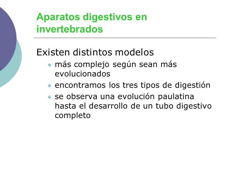 Estructura del estómago Tres zonas: Fondo Cuerpo Antro pilórico