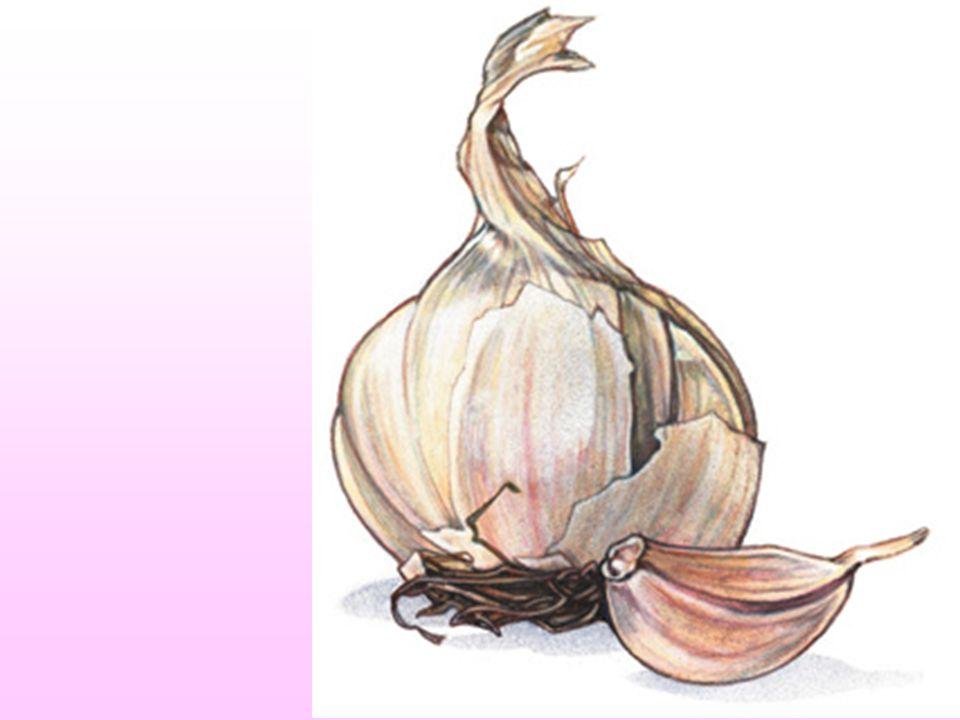 Otra dosis 1 diente de ajo morado cada 20 kilos de peso al día. Puede ser tomado engulléndose entero, crudo, como píldora. Ejm: Personas con ochenta k