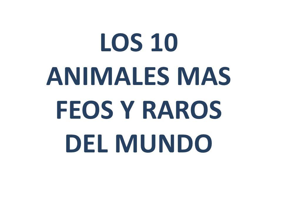 ANIMAL # 6