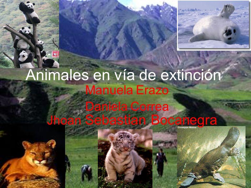 Animales en vía de extinción Manuela Erazo Daniela Correa Jhoan Sebastian Bocanegra