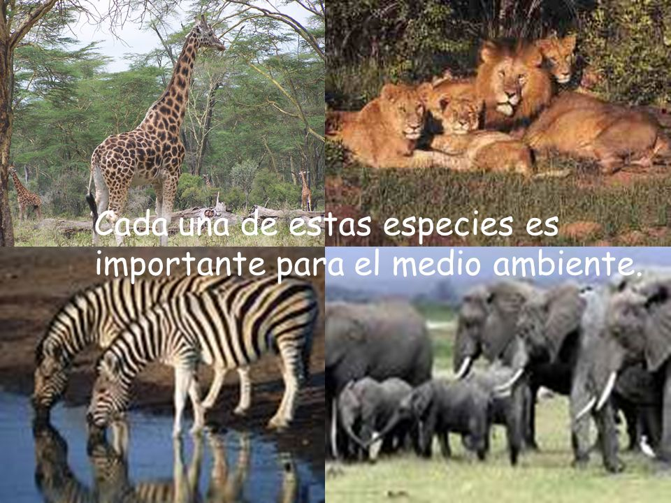 Cada una de estas especies es importante para el medio ambiente.
