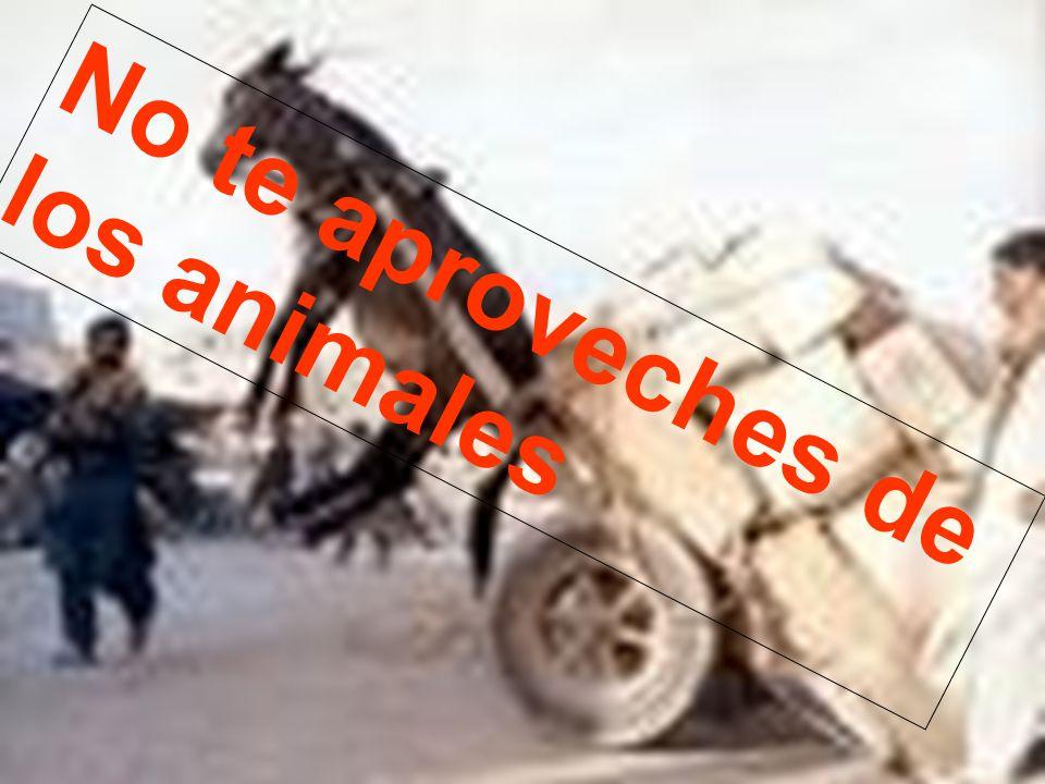 No te aproveches de los animales