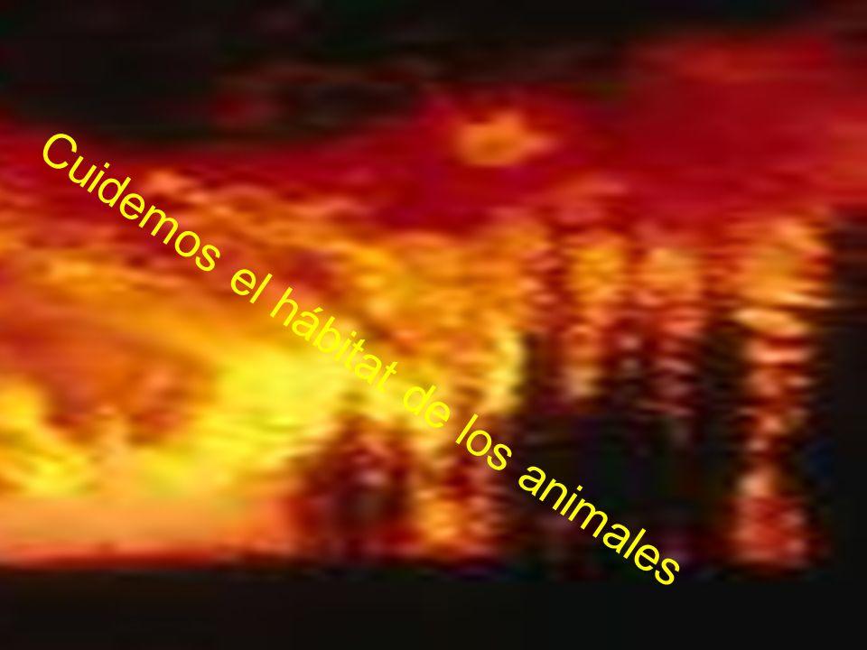 Cuidemos el hábitat de los animales