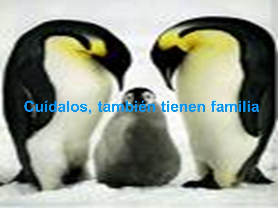 Cuídalos, también tienen familia