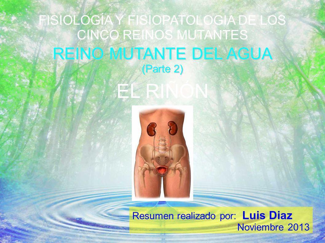 FISIOLOGÍA Y FISIOPATOLOGIA DE LOS CINCO REINOS MUTANTES REINO MUTANTE DEL AGUA (Parte 2) Resumen realizado por: Luis Diaz Noviembre 2013 EL RIÑÓN