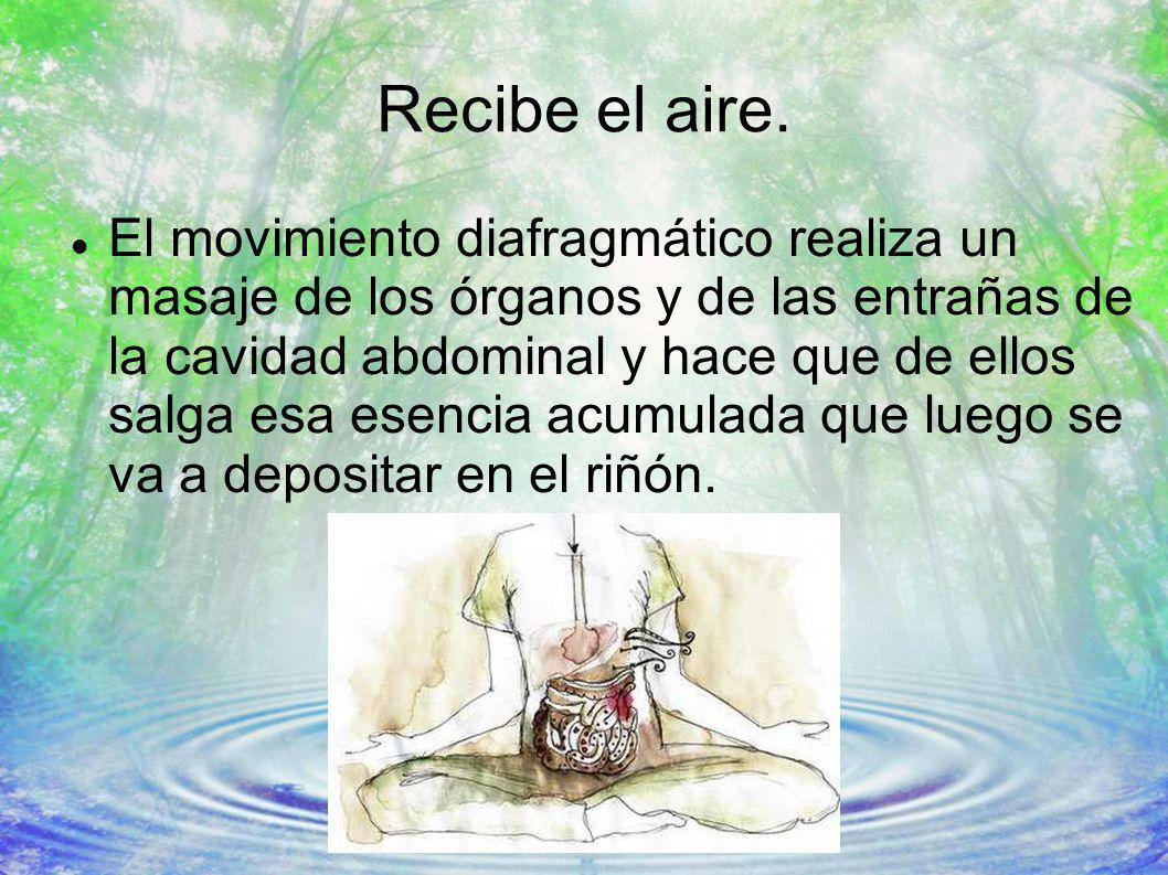 Recibe el aire. El movimiento diafragmático realiza un masaje de los órganos y de las entrañas de la cavidad abdominal y hace que de ellos salga esa e