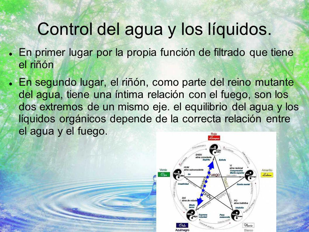 Control del agua y los líquidos. En primer lugar por la propia función de filtrado que tiene el riñón En segundo lugar, el riñón, como parte del reino