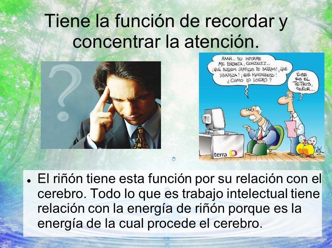 Tiene la función de recordar y concentrar la atención. El riñón tiene esta función por su relación con el cerebro. Todo lo que es trabajo intelectual