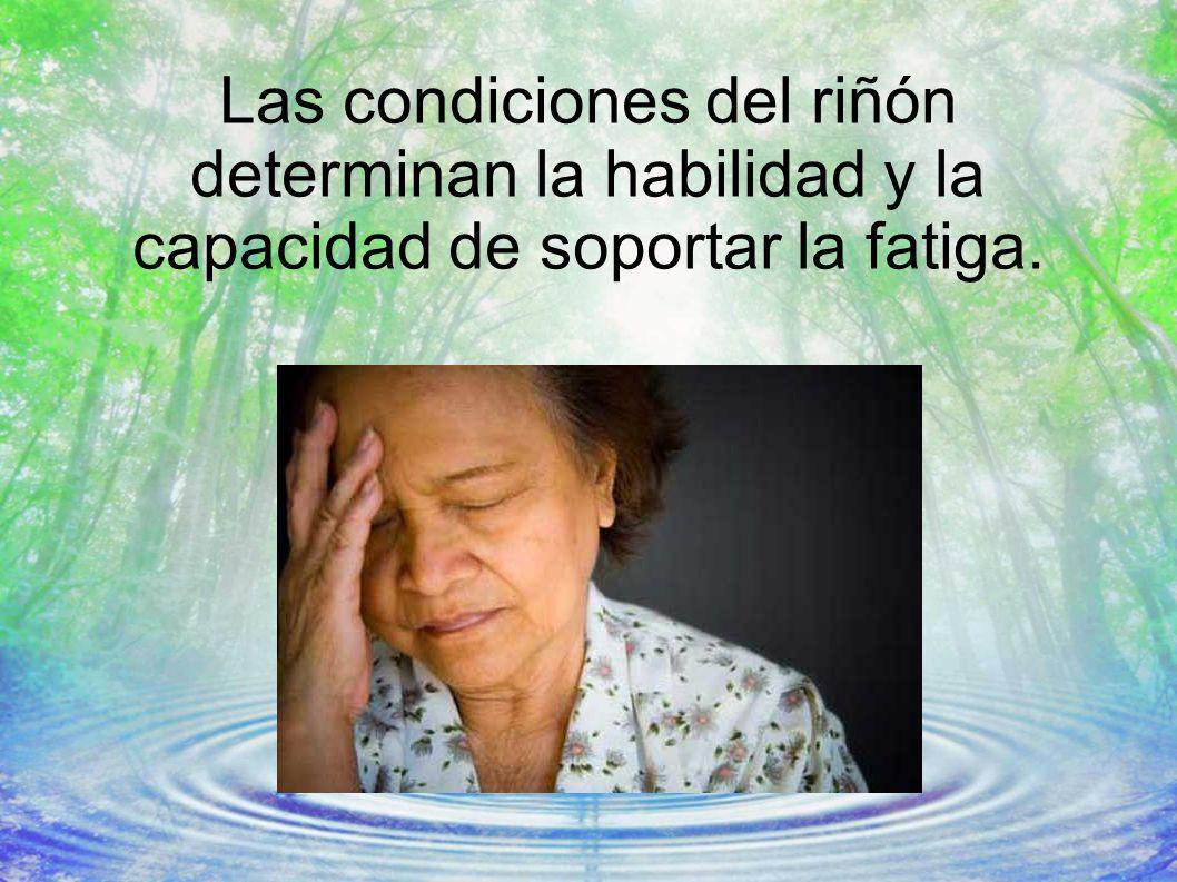 Las condiciones del riñón determinan la habilidad y la capacidad de soportar la fatiga.