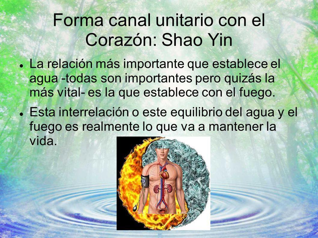 Forma canal unitario con el Corazón: Shao Yin La relación más importante que establece el agua -todas son importantes pero quizás la más vital- es la