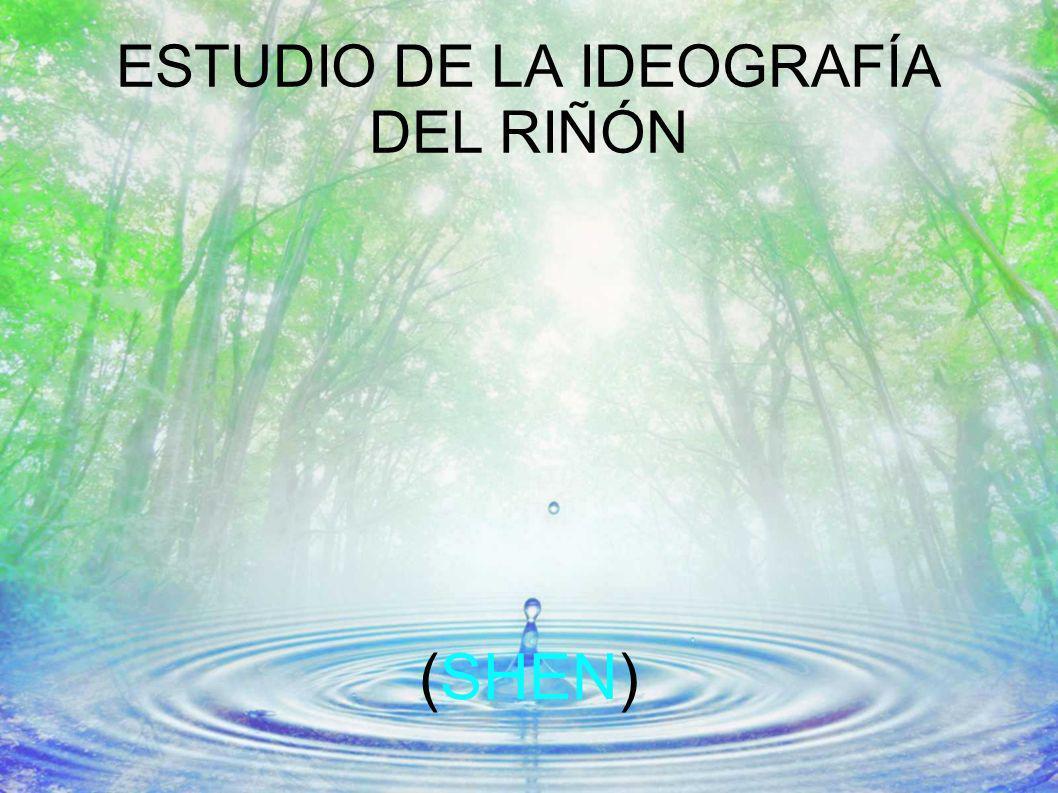 ESTUDIO DE LA IDEOGRAFÍA DEL RIÑÓN (SHEN)