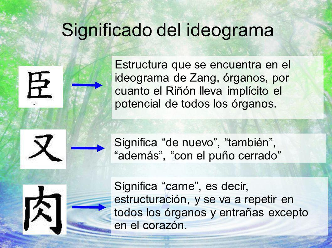 Significado del ideograma Estructura que se encuentra en el ideograma de Zang, órganos, por cuanto el Riñón lleva implícito el potencial de todos los