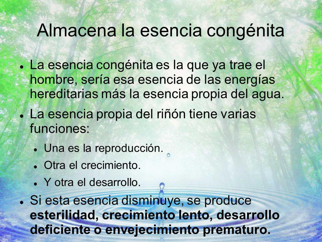 Almacena la esencia congénita La esencia congénita es la que ya trae el hombre, sería esa esencia de las energías hereditarias más la esencia propia d