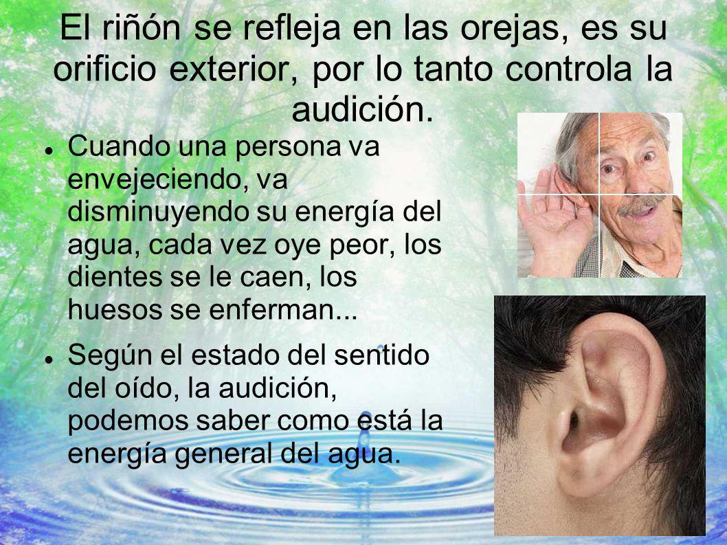 El riñón se refleja en las orejas, es su orificio exterior, por lo tanto controla la audición. Cuando una persona va envejeciendo, va disminuyendo su