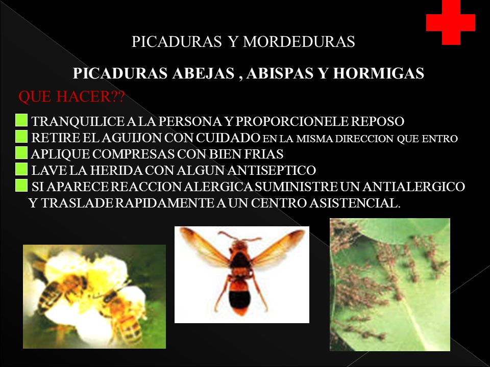 PICADURAS Y MORDEDURAS PICADURAS ABEJAS, ABISPAS Y HORMIGAS QUE HACER?.