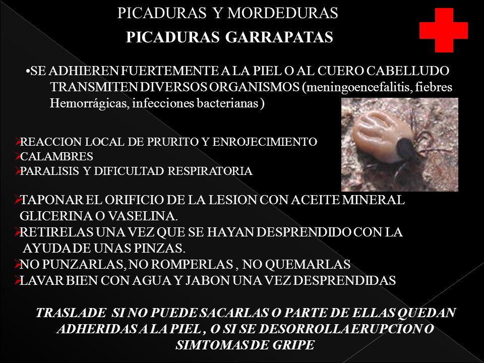 PICADURAS Y MORDEDURAS PICADURAS GARRAPATAS SE ADHIEREN FUERTEMENTE A LA PIEL O AL CUERO CABELLUDO TRANSMITEN DIVERSOS ORGANISMOS (meningoencefalitis, fiebres Hemorrágicas, infecciones bacterianas ) REACCION LOCAL DE PRURITO Y ENROJECIMIENTO CALAMBRES PARALISIS Y DIFICULTAD RESPIRATORIA TAPONAR EL ORIFICIO DE LA LESION CON ACEITE MINERAL GLICERINA O VASELINA.