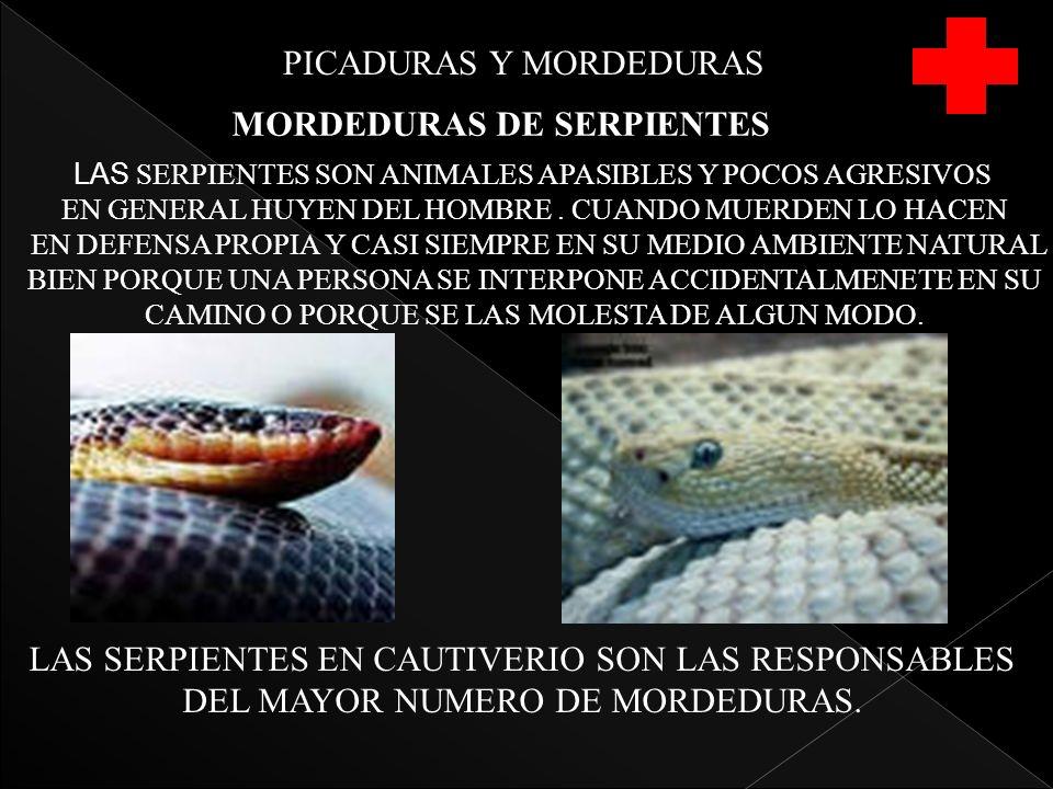 PICADURAS Y MORDEDURAS MORDEDURAS DE SERPIENTES LAS SERPIENTES SON ANIMALES APASIBLES Y POCOS AGRESIVOS EN GENERAL HUYEN DEL HOMBRE. CUANDO MUERDEN LO