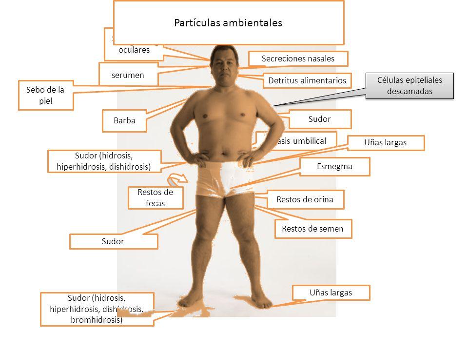 serumen Secreciones nasales Detritus alimentarios Sebo de la piel Sudor Litiasis umbilical Sudor (hidrosis, hiperhidrosis, dishidrosis) Esmegma Sudor Restos de orina Restos de fecas Sudor (hidrosis, hiperhidrosis, dishidrosis, bromhidrosis) Restos de semen Barba Uñas largas Células epiteliales descamadas Sebo del cuero cabelludo Secreciones oculares Partículas ambientales