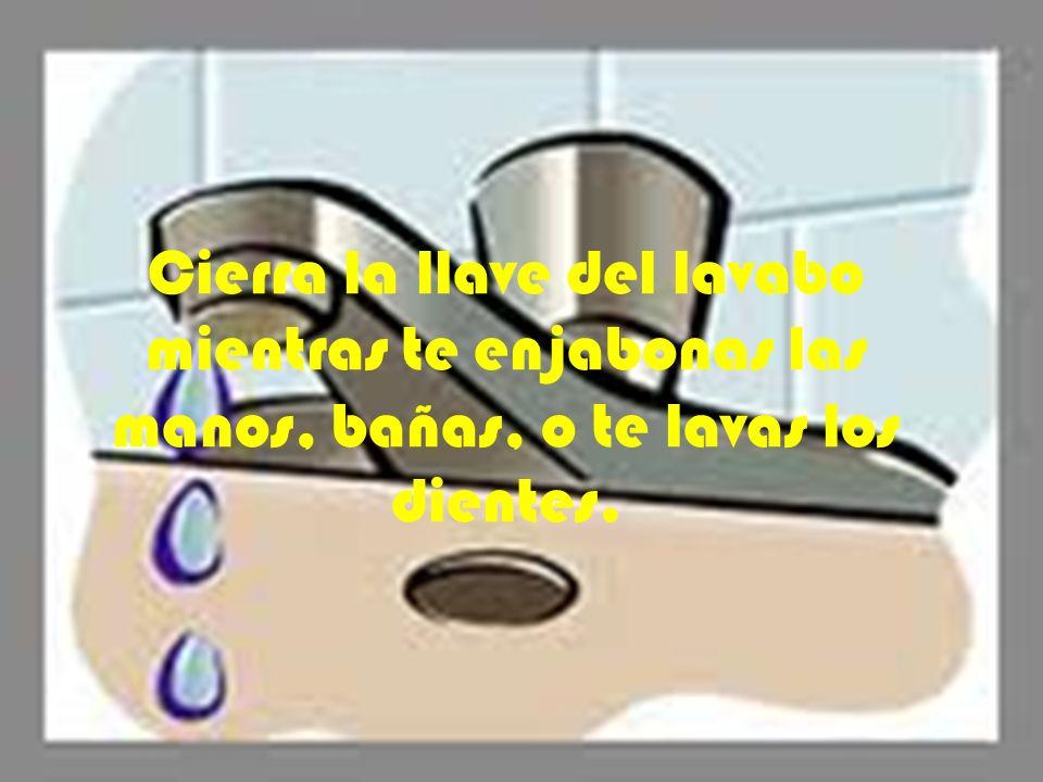 Junta el agua de la regadera en una cubeta mientras sale fría y úsala para el inodoro o para tus macetas.