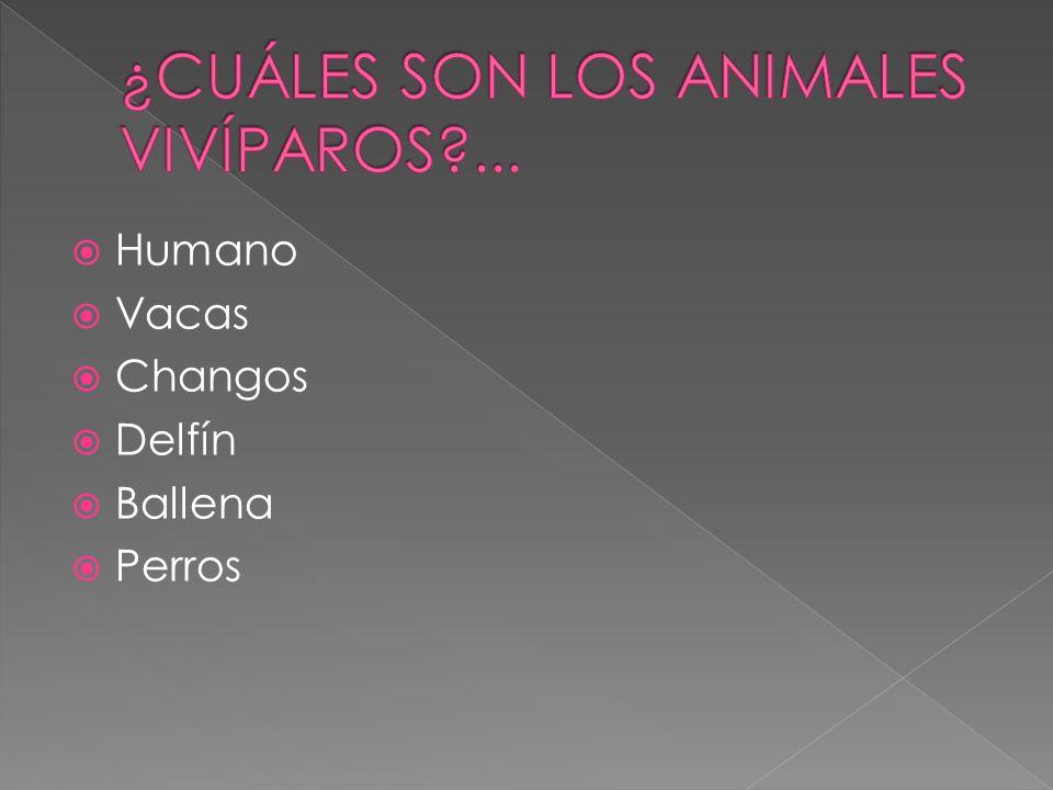 Humano Vacas Changos Delfín Ballena Perros