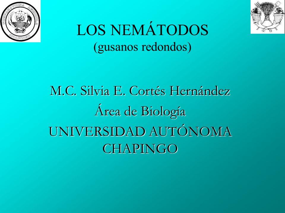 LOS NEMÁTODOS (gusanos redondos) M.C.Silvia E.