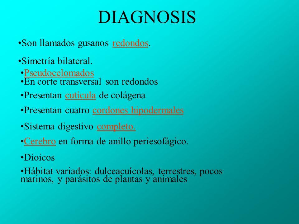 DIAGNOSIS Son llamados gusanos redondos.redondos Simetría bilateral.