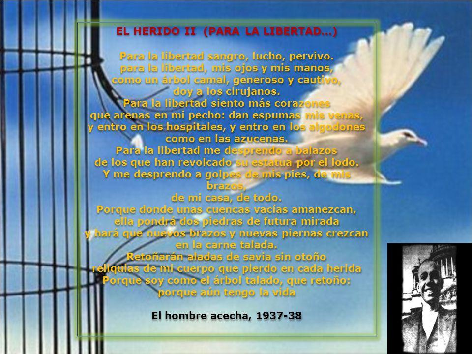 EL HERIDO II (PARA LA LIBERTAD…) Para la libertad sangro, lucho, pervivo. para la libertad, mis ojos y mis manos, como un árbol camal, generoso y caut