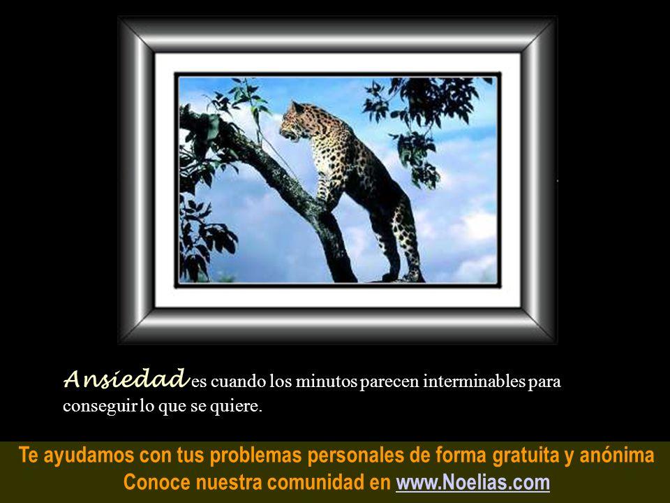 Te ayudamos con tus problemas personales de forma gratuita y anónima Conoce nuestra comunidad en www.Noelias.comwww.Noelias.com Vergüenza es un paño n