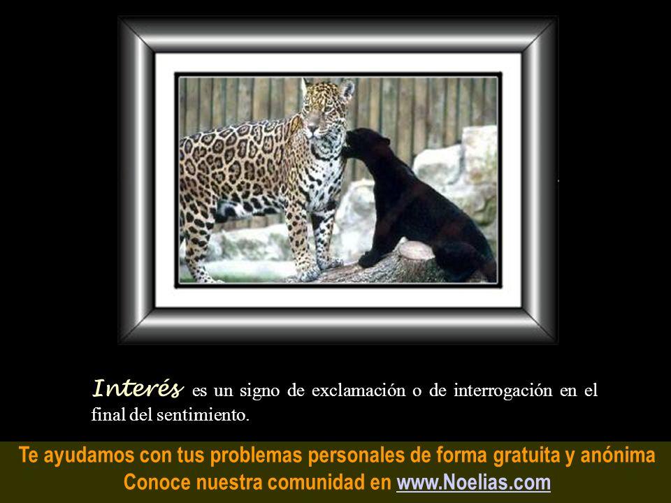 Te ayudamos con tus problemas personales de forma gratuita y anónima Conoce nuestra comunidad en www.Noelias.comwww.Noelias.com Ansiedad es cuando los