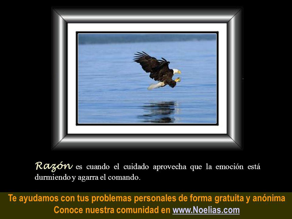 Te ayudamos con tus problemas personales de forma gratuita y anónima Conoce nuestra comunidad en www.Noelias.comwww.Noelias.com Lucidez es un acceso d