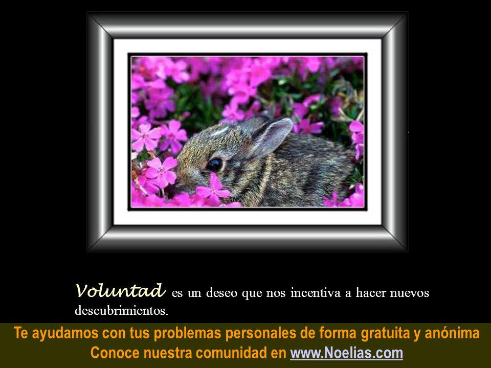 Te ayudamos con tus problemas personales de forma gratuita y anónima Conoce nuestra comunidad en www.Noelias.comwww.Noelias.com Razón es cuando el cui