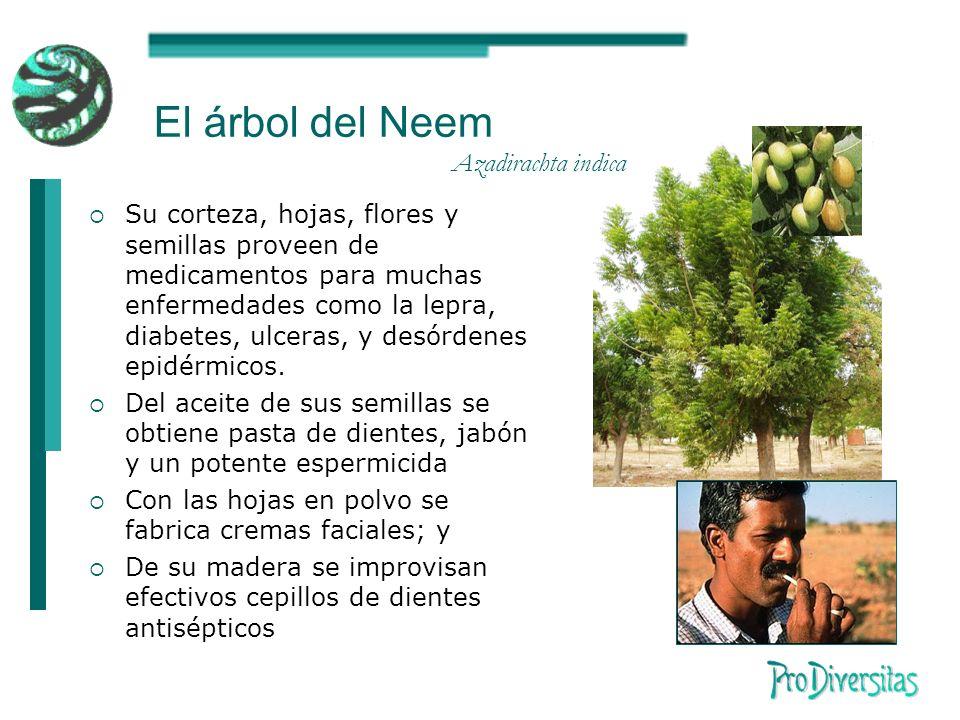 El árbol del Neem Su corteza, hojas, flores y semillas proveen de medicamentos para muchas enfermedades como la lepra, diabetes, ulceras, y desórdenes epidérmicos.