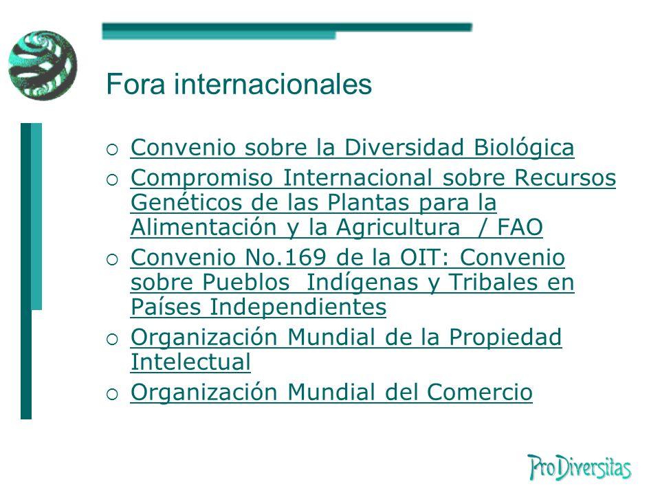 Fora internacionales Convenio sobre la Diversidad Biológica Compromiso Internacional sobre Recursos Genéticos de las Plantas para la Alimentación y la Agricultura / FAO Compromiso Internacional sobre Recursos Genéticos de las Plantas para la Alimentación y la Agricultura / FAO Convenio No.169 de la OIT: Convenio sobre Pueblos Indígenas y Tribales en Países Independientes Convenio No.169 de la OIT: Convenio sobre Pueblos Indígenas y Tribales en Países Independientes Organización Mundial de la Propiedad Intelectual Organización Mundial de la Propiedad Intelectual Organización Mundial del Comercio