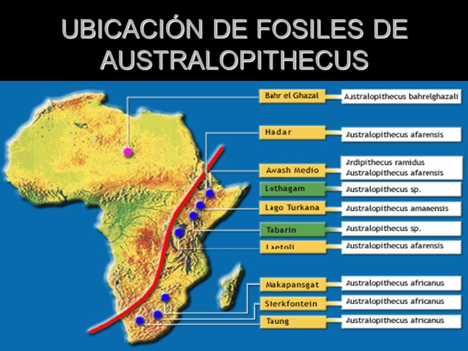 UBICACIÓN DE FOSILES DE AUSTRALOPITHECUS