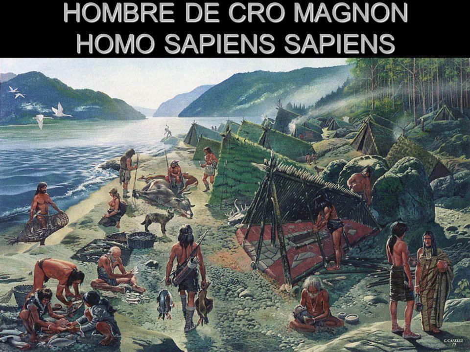 HOMBRE DE CRO MAGNON HOMO SAPIENS SAPIENS