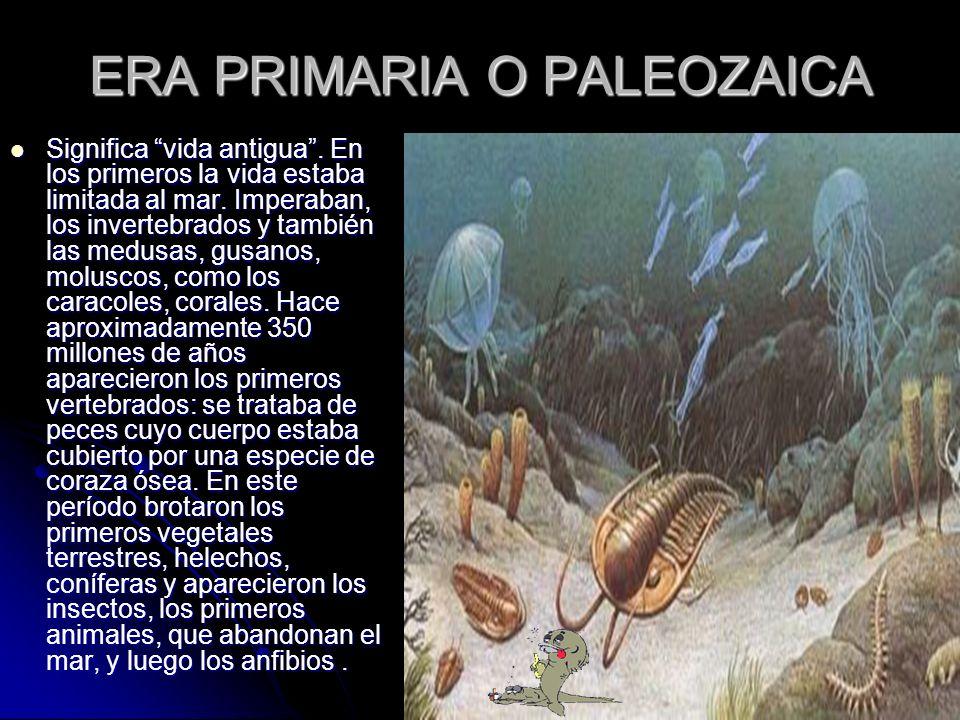ERA PRIMARIA O PALEOZAICA Significa vida antigua. En los primeros la vida estaba limitada al mar. Imperaban, los invertebrados y también las medusas,