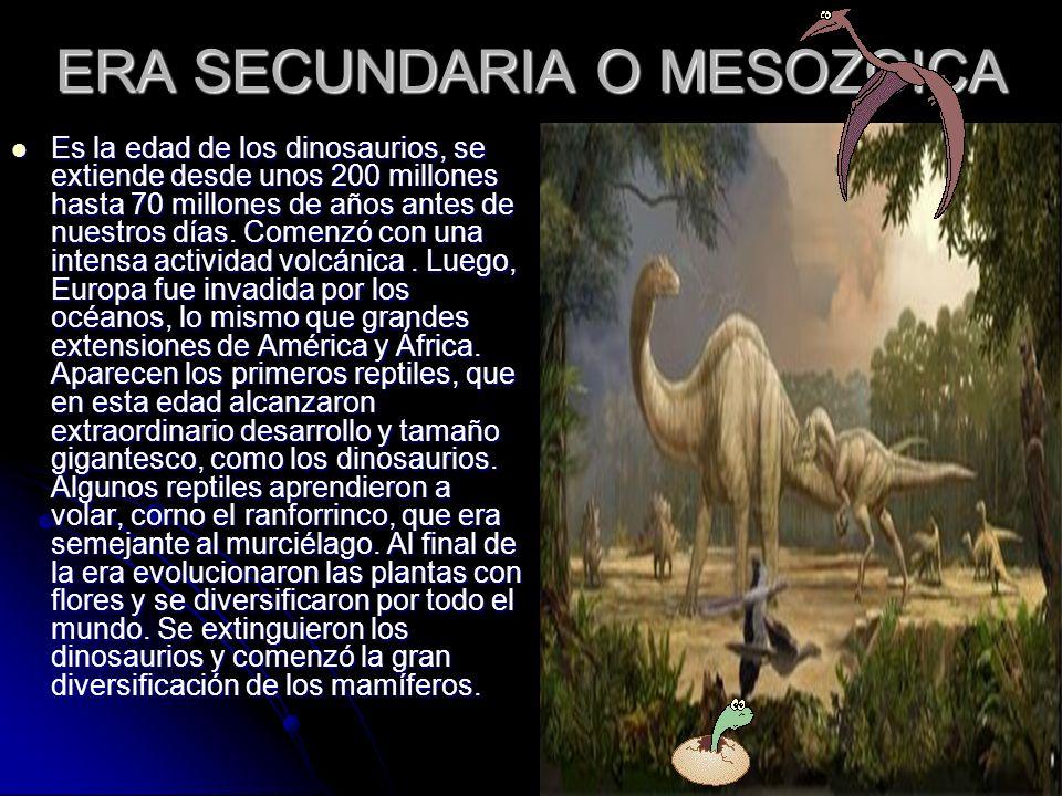 ERA SECUNDARIA O MESOZOICA Es la edad de los dinosaurios, se extiende desde unos 200 millones hasta 70 millones de años antes de nuestros días. Comenz