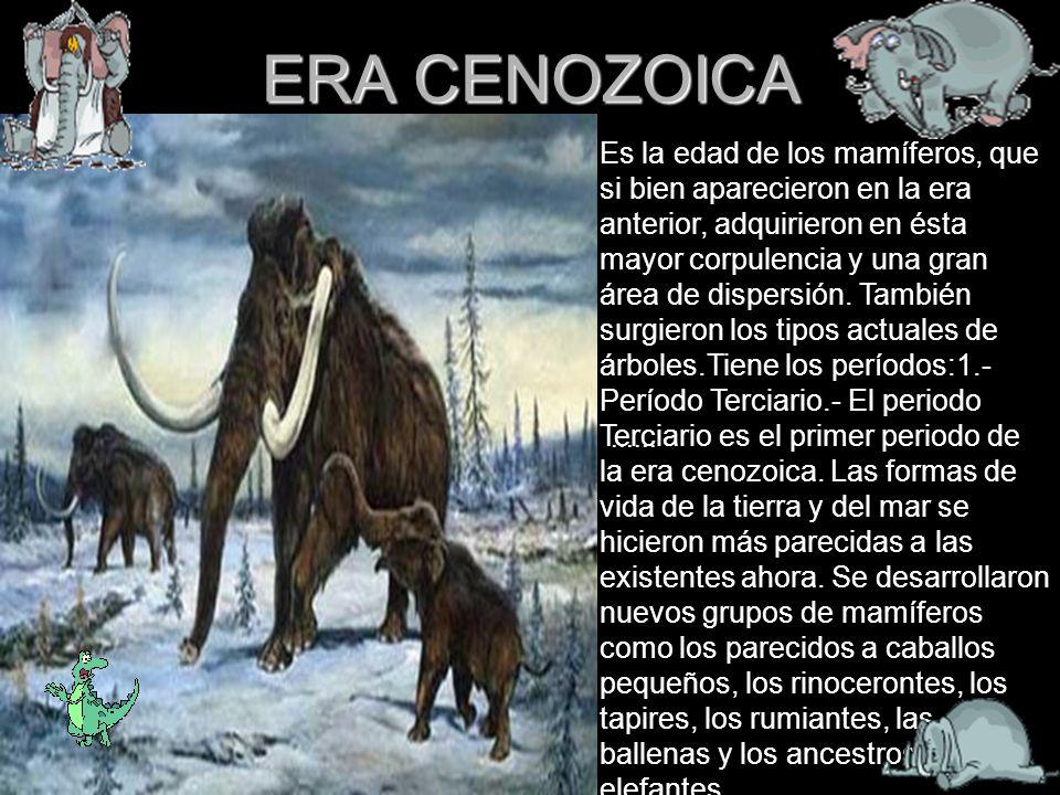 ERA CENOZOICA Es la edad de los mamíferos, que si bien aparecieron en la era anterior, adquirieron en ésta mayor corpulencia y una gran área de disper