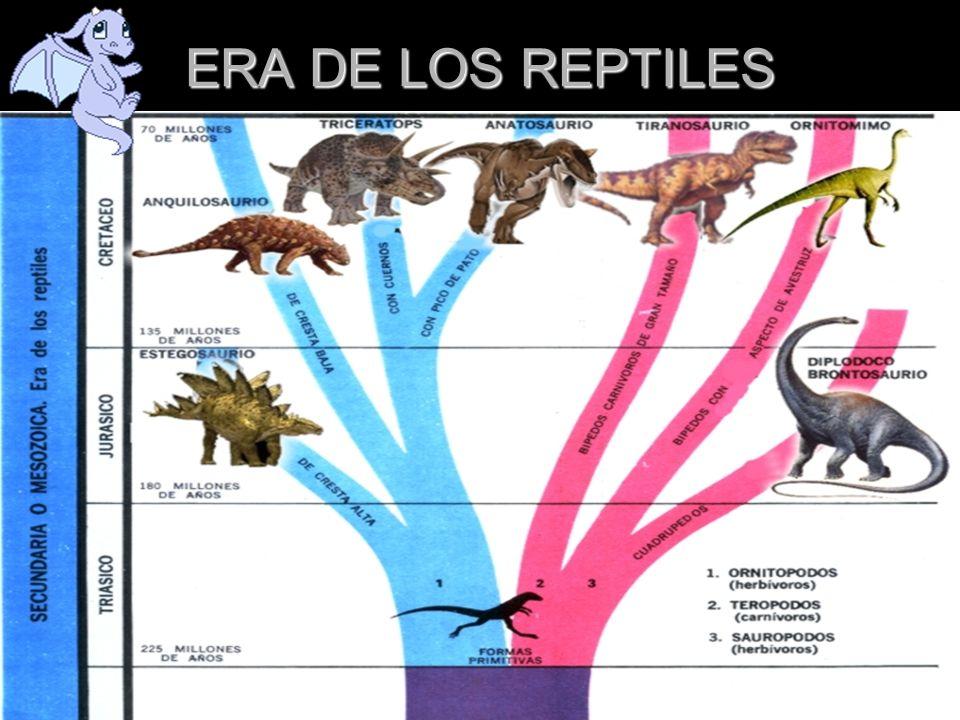 EXTINCION DE LOS DINOSAURIOS El meteorito que se cree provocó la extinción de los dinosaurios se estrelló, hace 65 millones de años, en lo que actualmente es el pueblo de Chicxulub en la costa de la península de Yucatán.