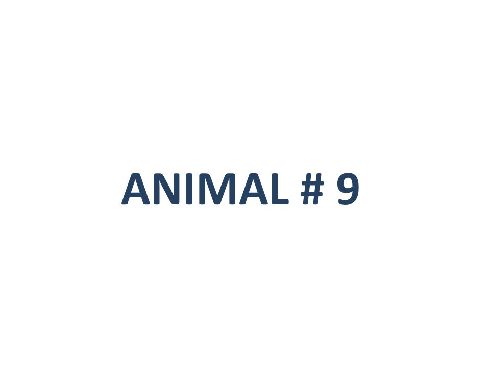 ANIMAL # 9