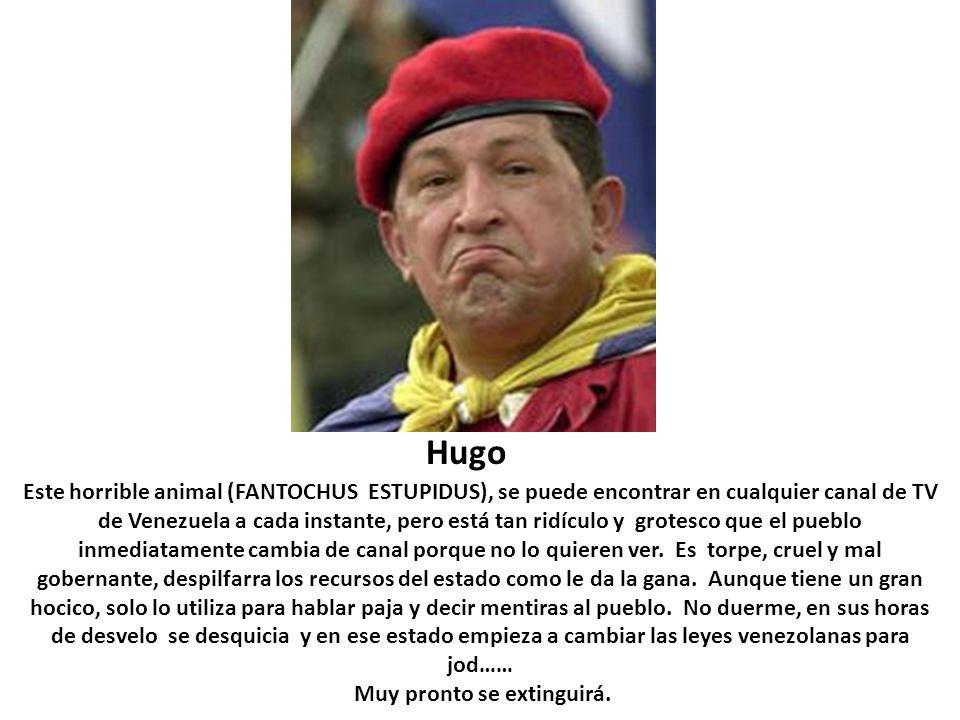 Hugo Este horrible animal (FANTOCHUS ESTUPIDUS), se puede encontrar en cualquier canal de TV de Venezuela a cada instante, pero está tan ridículo y gr