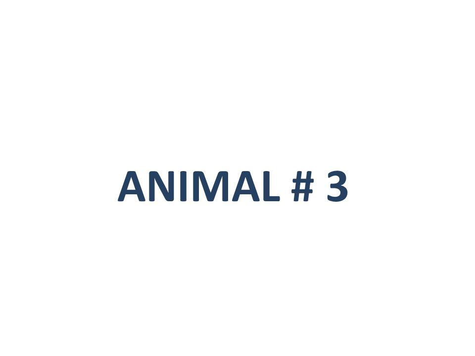 ANIMAL # 3